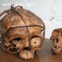 Old Dayak skull Borneo Indie